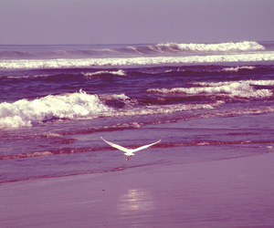 amazing, beach, and bird image
