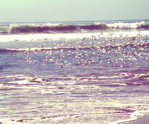amazing, beach, and birds image