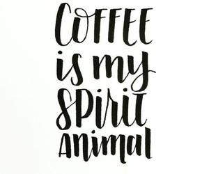 animal, adicion, and cafe image