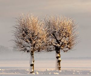 winter, beauty, and snow image