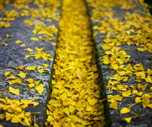 autumn and yellow image