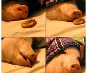 funny and animal image