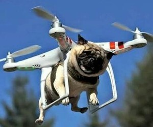 awesome, dog, and drone image