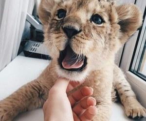 animals, pets, and wild image