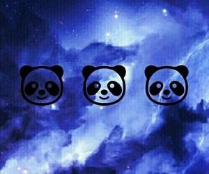 blue, panda, and background image
