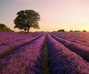 aesthetic, alternative, and art image
