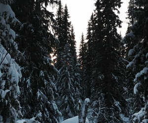 forest, sky, and snow image
