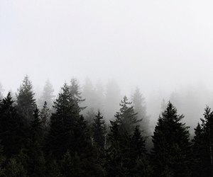 fog, misty, and mountains image