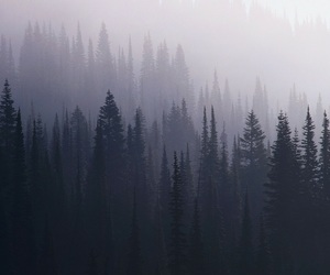 grunge, forest, and tree image