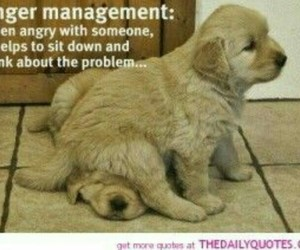 anger, dogs, and funny image