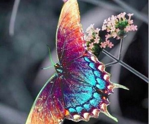 aesthetic, beauty, and butterfly image
