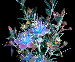 Fluorescence, photography, and ultraviolet image