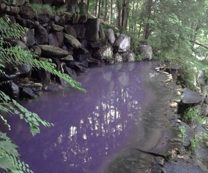 nature, grunge, and purple image