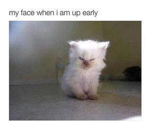 funny, cat, and morning image