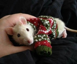 animal, mouse, and sweater image