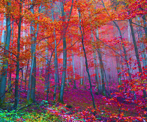 colours, enchanted, and trees image