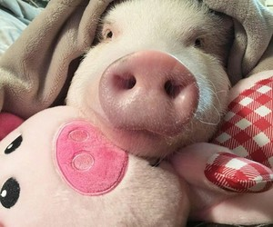 bedtime, pigs, and pillows image