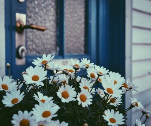 flower, grunge, and natural image