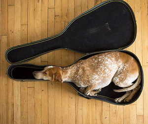 dog, guitar, and animal image