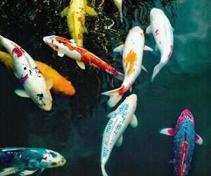 fish, animal, and water image