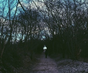 forest, gloomy, and rostock image
