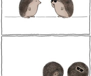funny, hedgehog, and roll image