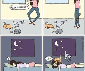 cat, funny, and play image