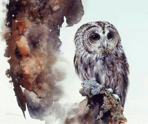 animals, beauty, and owl image