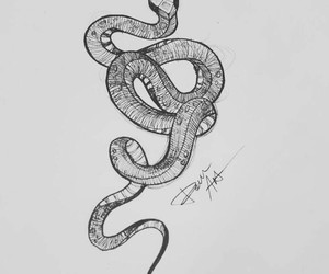 snake and tattoo image