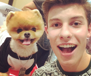 shawn mendes, cute, and boy image