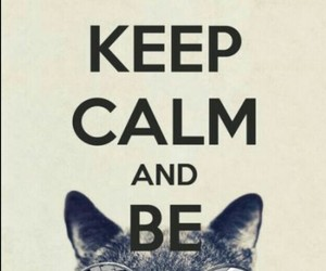 keep calm, cool, and cat image