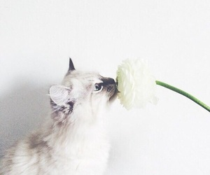 background, cat, and flower image
