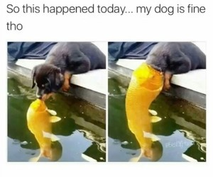 funny, dog, and fish image