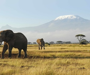 africa, mountains, and animals image