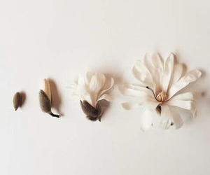 flowers, white, and simple image