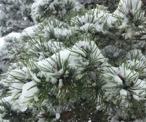 evergreen, green white, and green image