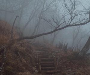 forest, fog, and landscape image