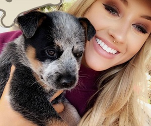 puppy and aspen mansfield image