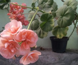 flores, plantas, and dafne+v. image