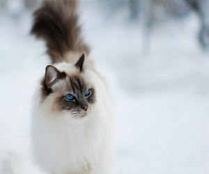 cat, snow, and animal image
