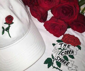 rose, red, and white image