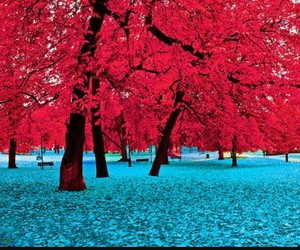 blue, tree, and red image