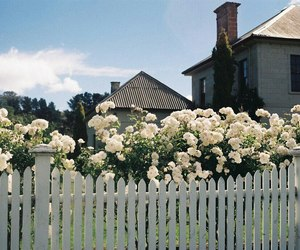 flower, house, and nature image