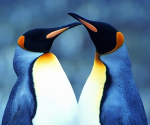 penguins and penguins love image