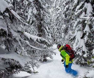forest, powder, and Skiing image