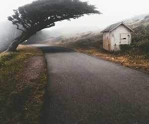 beauty, fog, and nature image