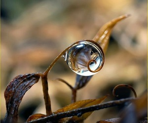 nature, art, and water image
