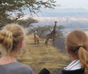 baby, giraffes, and nature image