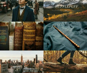 animals, books, and harry potter image