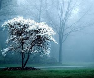 tree, nature, and white image